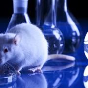 ricerca_sperimentazione_animale