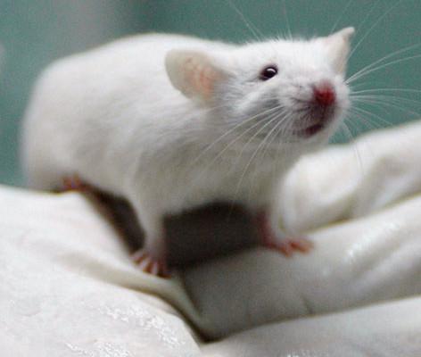 sperimentazione-animale